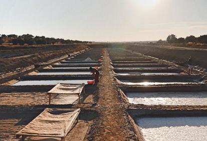 Sal Marim: récolte artisanale de la fleur de sel la plus prisée d'Algarve