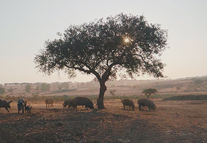 THE ALENTEJO PORK