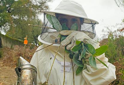 Tapada Nacional de Mafra: Un ancien camp de chasse du roi où les abeilles sont reines.