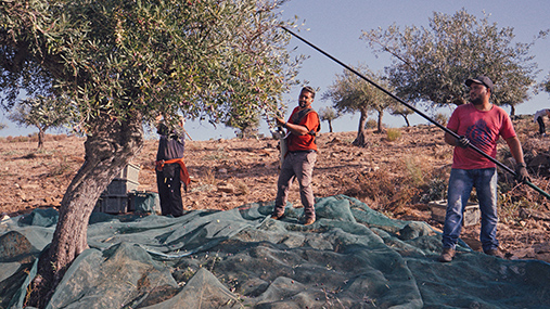 Domaine CARM: bastion de la meilleure huile d'olive au monde