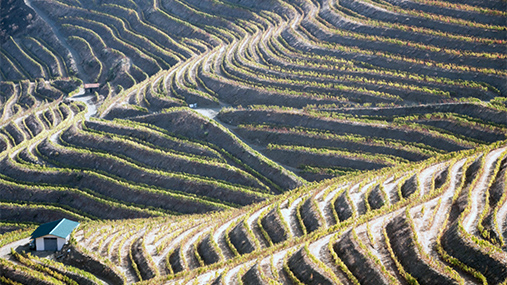 The Douro Valley: exceptional land and vineyards at the origin of the F wines.