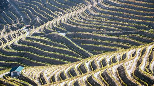La vallée du Douro: un terroir et des vignobles d'exception à la source des vins F.